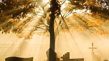 Bury the Dead