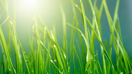 Greening Lent